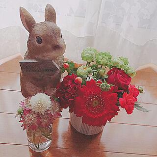 女性、ミニウサギに関するcloversさんの実例写真