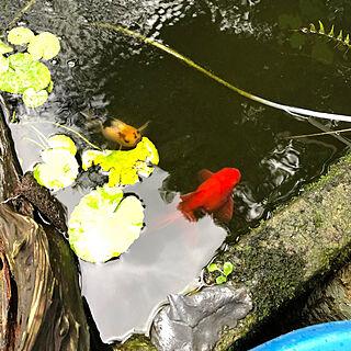 女性30歳の家族暮らし3LDK、人の家に関するsoupinmamaさんの実例写真