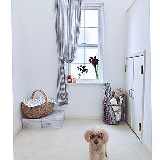 ベッド周り/犬/これさえあれば、わたしの部屋/迷走系インテリア/ぶらりん同好会...などのインテリア実例 - 2018-07-18 22:01:34