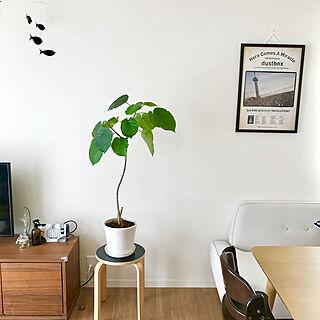 部屋全体/北欧/ウンベラータ/メロコア/dustbox...などのインテリア実例 - 2018-07-11 15:30:52