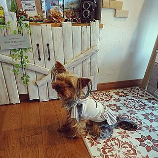 リビング/犬と暮らす/犬の柵DIY/かるかるブリック/塗り壁...などのインテリア実例 - 2018-06-16 14:30:50