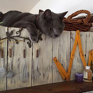 猫部の人気の写真(RoomNo.2238288)