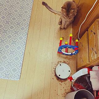 おばあちゃんは忙しい(>人<;)/赤ちゃんがいる生活/猫と暮らす♡/猫大好き❤️/初めての男の子...などのインテリア実例 - 2021-08-29 23:16:38
