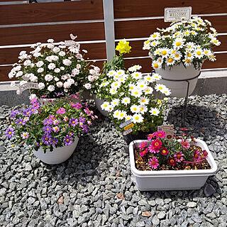 玄関/入り口/北欧好き/注文住宅/お花/寄せ植え...などのインテリア実例 - 2019-05-16 11:18:27
