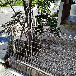 玄関/入り口/建売/建売住宅/人工芝をひきます/草目地...などのインテリア実例 - 2018-08-31 13:47:03