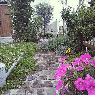 ガーデニング/ガーデン/オリーブの木/シャビーな雰囲気が好き/パリの花屋さんに憧れる...などのインテリア実例 - 2018-06-19 20:21:44