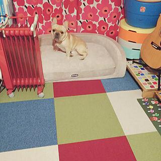 、ペットと暮らす家に関するayucchiさんの実例写真