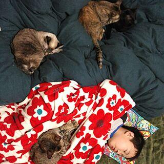 ベッド周り/猫多頭買い/インテリアじゃなくてごめんなさい/ねこのいる日常/ねこばかりすみませんm(._.)m/犬猫多頭飼い...などのインテリア実例 - 2016-12-24 01:15:35