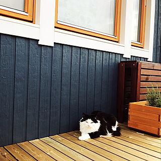 北欧/スウェーデンハウス /猫/植物のある暮らし/ガーデニング初心者...などのインテリア実例 - 2018-05-19 12:29:48