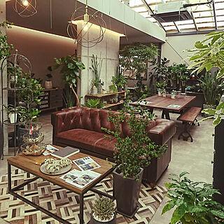 女性35歳の家族暮らし、観葉植物に癒やされてます✮に関するakiさんの実例写真