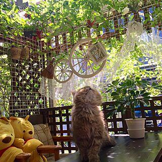 リビング/あんず/ねこ/ガーデニング/薔薇...などのインテリア実例 - 2016-04-29 10:10:43