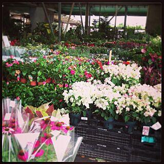 お花/植物/うちじゃないのインテリア実例 - 2013-06-29 15:37:25
