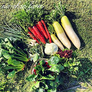 種から育てる/無農薬野菜/na-chan farmはインスタ公開中/na-chan farm/ボタニカルライフ...などのインテリア実例 - 2019-04-05 07:21:12