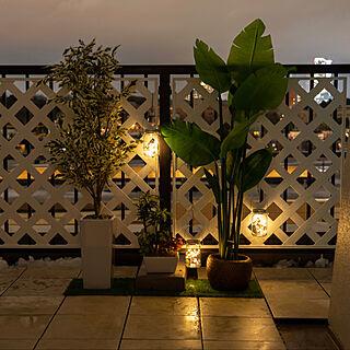 LEDライト/バルコニー/ベランダ/ニトリ/観葉植物...などのインテリア実例 - 2020-03-29 22:44:17