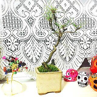 棚/盆栽/カフェ風/観葉植物/メキシコ...などのインテリア実例 - 2015-11-18 00:58:58