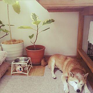 リビング/柴犬/観葉植物/リサとガスパール/IKEA...などのインテリア実例 - 2015-10-02 13:29:23
