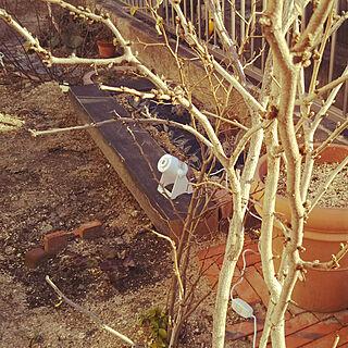 ベッド周り/ベッド周りではありません/うら庭/花壇DIY/お庭改造中...などのインテリア実例 - 2018-01-16 14:53:38
