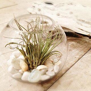 リビング/regent house/アロマ関連/植物/DIY...などのインテリア実例 - 2014-02-19 02:09:06