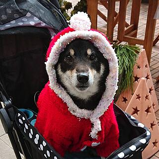 玄関/入り口/RC柴犬の会/クリスマス/手編み/柴犬...などのインテリア実例 - 2019-12-22 13:57:38