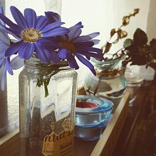 キッチン/サイネリア/ジャムの空瓶/英字新聞のインテリア実例 - 2015-03-30 13:34:03