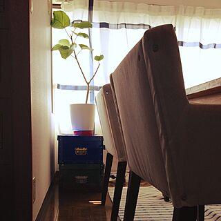 リビング/植物/IKEA/植物の位置変えてみただけのインテリア実例 - 2014-08-01 14:04:19