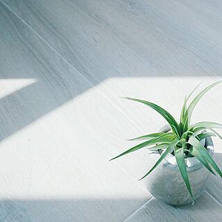 plantsの人気の写真(RoomNo.3200104)