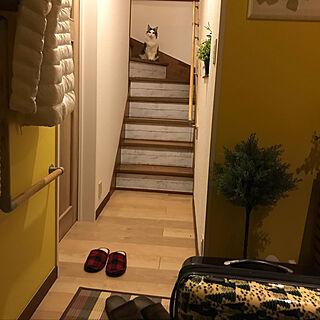 玄関/入り口/おかえりなさい/お土産/ねこと暮らす/猫シッターしてますのインテリア実例 - 2018-03-30 19:39:50