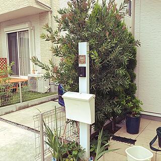 植木→鉢植えにする/外構は自分達で/玄関アプローチ横/玄関まわりもどうにかしたい。/みどりがいっぱい...などのインテリア実例 - 2019-07-21 17:24:35