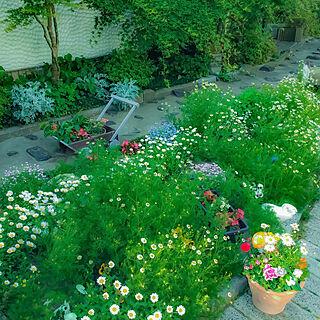 花壇/カート/一番好きな場所/紅葉/花のある暮らし...などのインテリア実例 - 2020-05-10 16:17:11