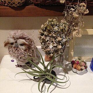 棚/ふくろう/植物/ドライフラワー/エアプランツ...などのインテリア実例 - 2014-10-09 18:12:00