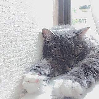 猫と暮らすの人気の写真(RoomNo.2891831)