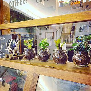 Shelf/観葉植物/カフェ風インテリア/カフェ風キッチン/ねこのいる日常...などのインテリア実例 - 2020-03-20 02:32:36