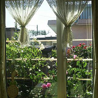 リビング/ローズガーデン/家庭菜園のインテリア実例 - 2016-07-12 19:58:35