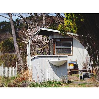 女性51歳の家族暮らし、梅の木に関するyukiさんの実例写真