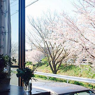 女性49歳の家族暮らし2LDK、窓からの桜に関するtakaさんの実例写真