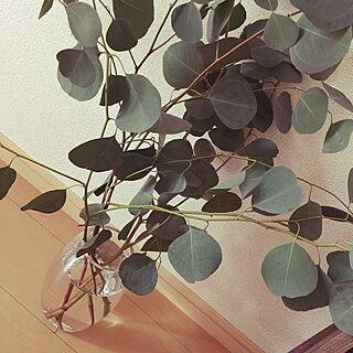 リビング/植物/ユーカリにはまり中/ユーカリの葉/一人暮らし...などのインテリア実例 - 2014-10-27 10:57:52