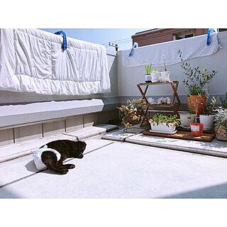 玄関/入り口/ルーフバルコニー/ガーデニング/観葉植物/一人暮らし...などのインテリア実例 - 2018-05-17 23:00:56