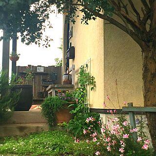 玄関/入り口/オリーブの木/花ざかり(*´◒`*)/板塀/玄関ガーデン...などのインテリア実例 - 2017-06-30 09:19:55