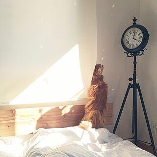 ベッド周り/時計/建売住宅/すっきり暮らしたい/ねこと暮らす。...などのインテリア実例 - 2017-05-13 22:30:02