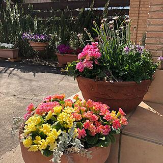 花のある暮らし/いいね!ありがとうございます♪/見てくれてありがとうございます♥/庭の花/グリーンのある暮らし...などのインテリア実例 - 2019-03-24 14:56:50