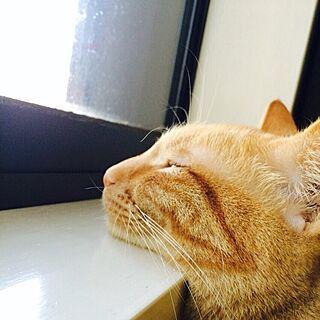 猫窓/デコ窓/ナチュラル/ネコデコ窓/デコネコ窓...などのインテリア実例 - 2017-06-07 21:28:36