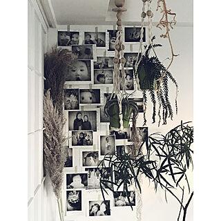 ドライフラワー/写真コラージュ/観葉植物のある暮らし/リビングのインテリア実例 - 2017-09-15 17:36:21