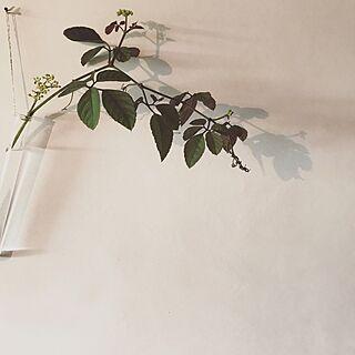 壁/天井/植物/花/影を愉しむ/影...などのインテリア実例 - 2017-07-14 08:20:02