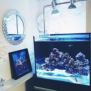 女性27歳の同棲2LDK、水槽に関するmiporiさんの実例写真
