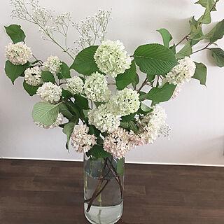 紫陽花/花のある暮らし/花/棚のインテリア実例 - 2020-04-30 12:35:58