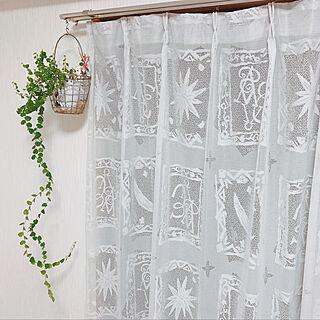 、観葉植物たちに関するalohaさんの実例写真