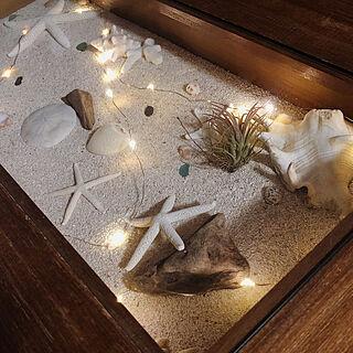 エアープランツ/流木/スカシカシパン/starfish/ヒトデ...などのインテリア実例 - 2020-02-22 00:13:11