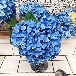白も好き/青い紫陽花が一番好き/キッチンのインテリア実例 - 2021-06-30 18:23:32