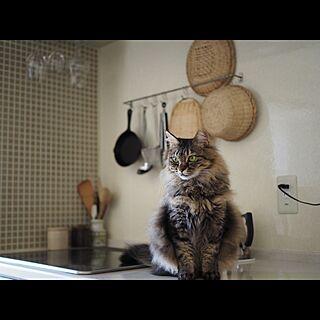 キッチン/民芸品/竹ざる/台所道具/DIY TILE...などのインテリア実例 - 2017-04-02 09:45:40