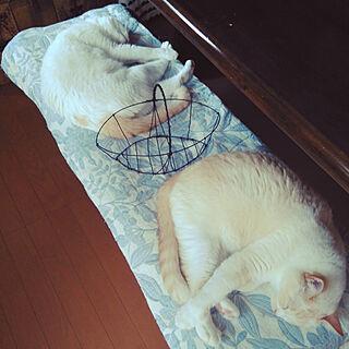 猫と暮らすの人気の写真(RoomNo.2875153)